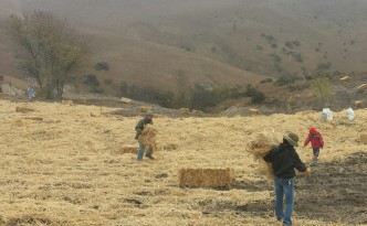 Straw and seed throw at the October 25, 2014 National Public Lands Day at the Fort  Ord National Monument.