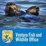 ventura fish and wildlife